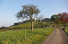 Schafberg