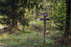 Hofoldinger Forst Hofolding Forest near Munich