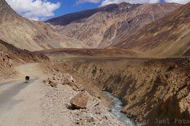 Guck mal rein: Baralacha La - Lingti / Sarchu Tsarap Valley