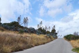 Asteroussia bei/near Stavies